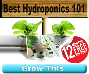 How To Grow Vegetables Hydroponically